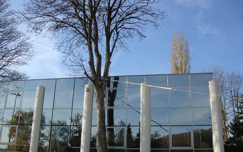 Elagage d'arbres dangereux