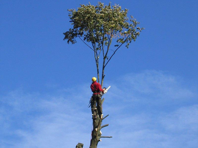 Elagage d'arbres